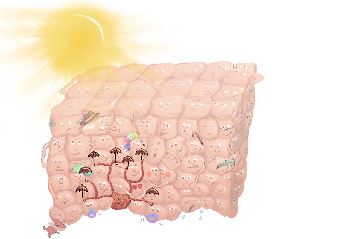 Melanozyten in Epidermis bei UV
