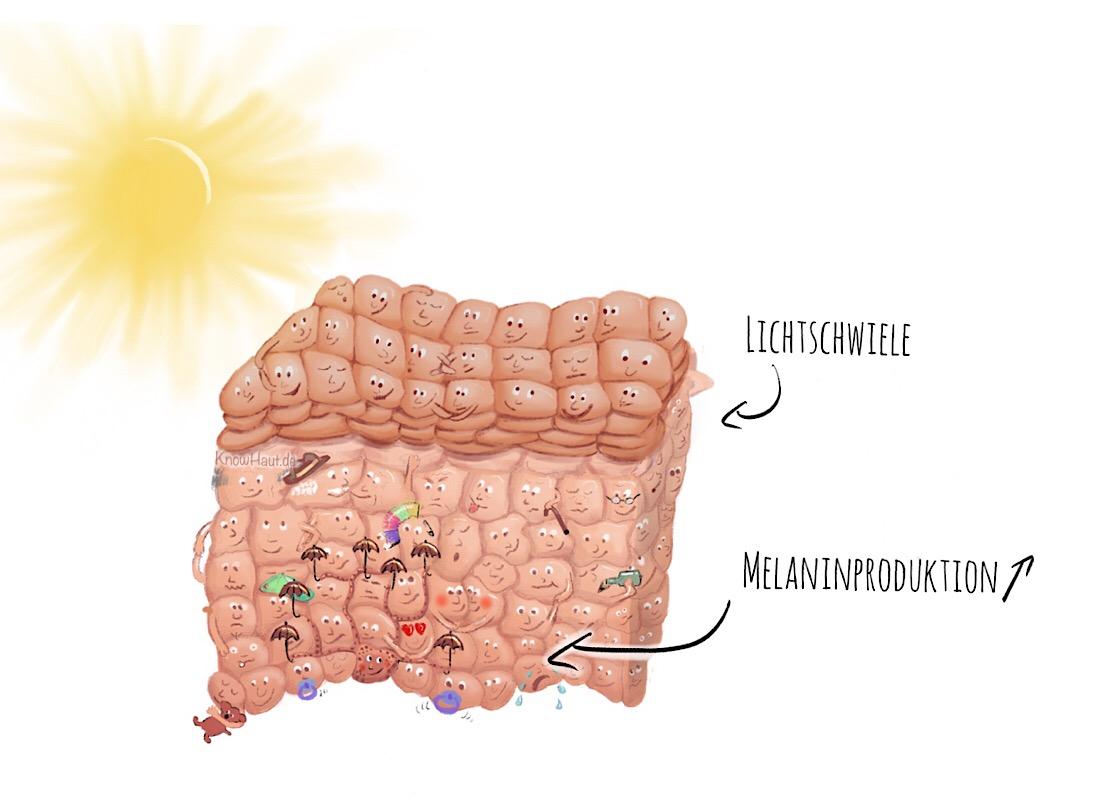Haut kann sich in Maßen schützen