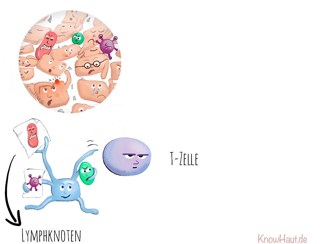Dendritische Zelle trifft T-Zelle