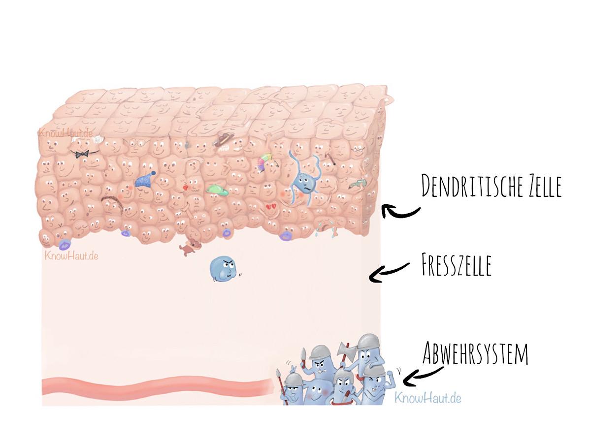 NL 10 Oberhaut und Immunsystem